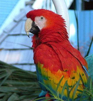 Hilton Head Parrot