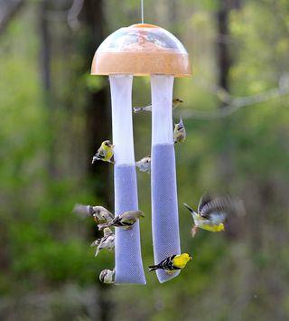 Finch Feeder fly_2906