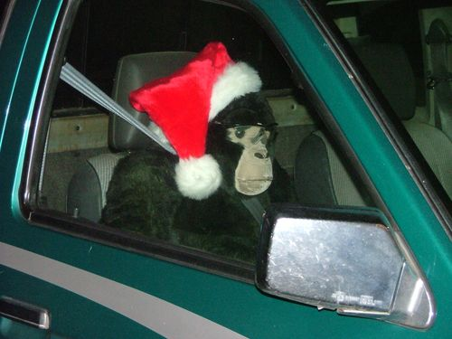 Monkey in Car Side View