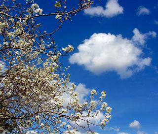 Dogwood Cloud Sx230_0438