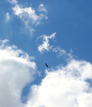 BirdCloudVertT2iSP_9674