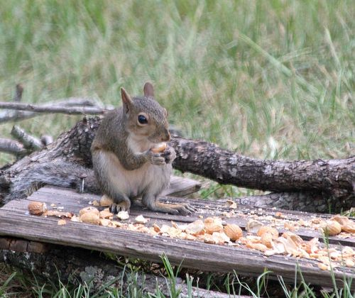 SquirrelEM2Peanut_0380