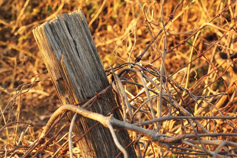 FenceeEM2Post_2635