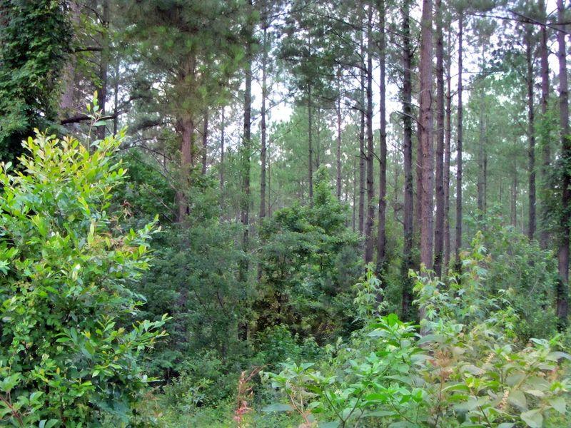 ForestEM3NormaSX230_9864