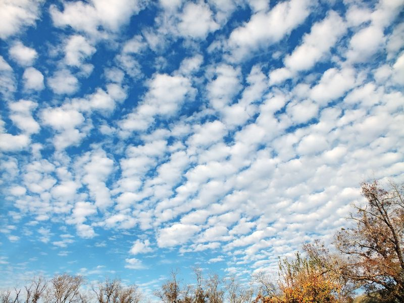 CloudsEM2FluffyNov19Fuji7649