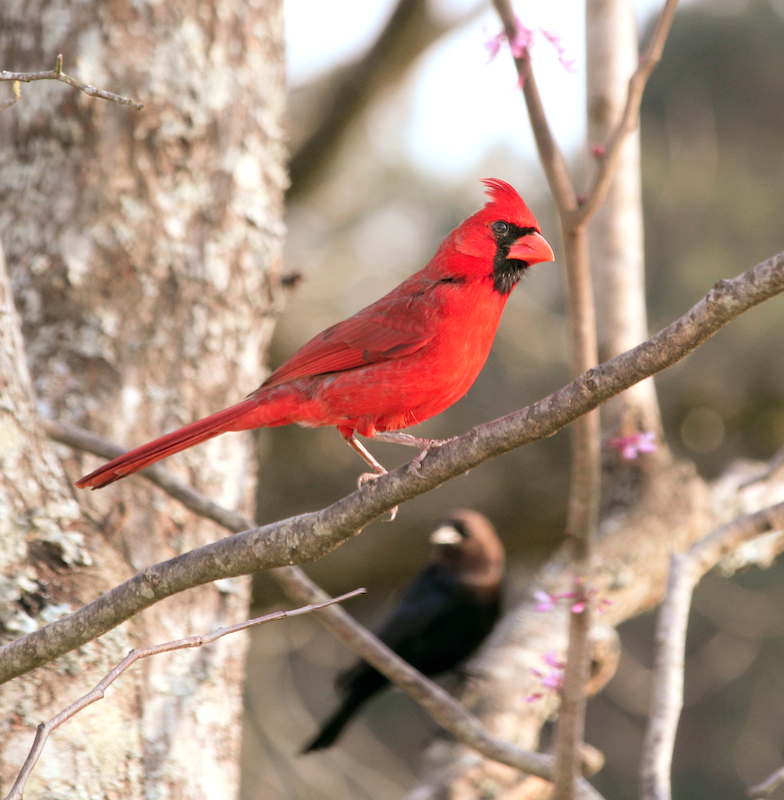 CardinalEM2MaleT2iMarch_3986