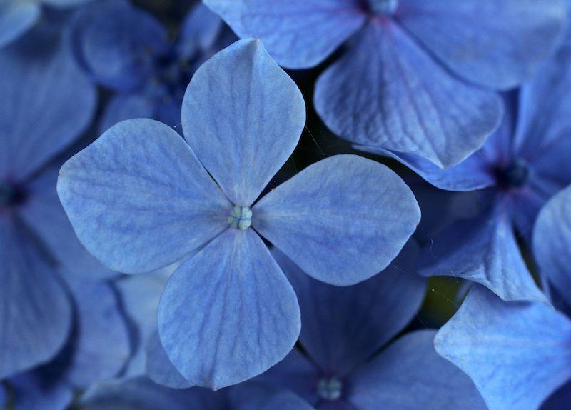 BlueEM3FlowersEvyln_9415