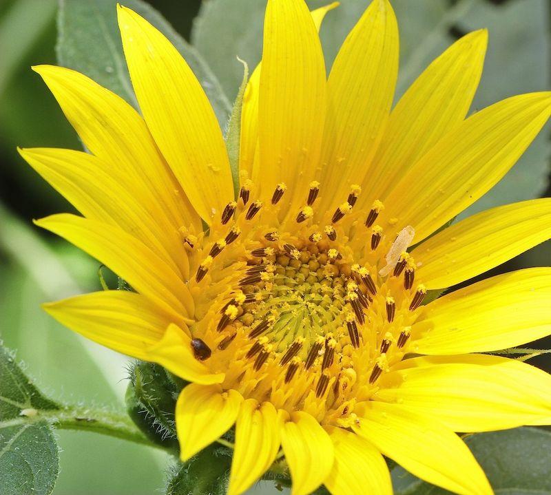 SunEM3flower7DJune_4090